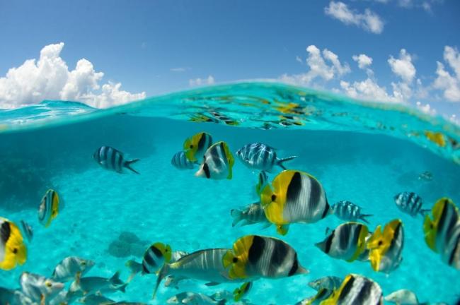 VIAJES A LA POLINESIA DESDE BUENOS AIRES - Tahiti - Polinesia Francesa / Bora Bora / Moorea / Rangiroa /  - Viajes Exoticos